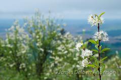 Kamiak Spring (jamesdelbertanderson) Tags: palouse whitmancounty kamiakbutte nature pnw washington easternwashington inlandnorthwest
