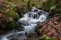 Balagan Burn Balloch UK (Gary Ellis Photography) Tags: autumn balloch ballochpark fall flowersplants lochlomond scotland uk westdunbartonshire agricultural beautiful beauty brook burn colorimage colorful colourimage colourful creek daytime digital environmental evening exterior flowing frontview gorgeous highlands historic landscape landscapephotography leaf leaves life liquid longexposure naturephotography outdoors outside park plant recreation rivulet rock scenic serene stone stream tree unitedkingdom vegetation water wet