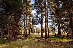 Tuolumne Meadows (beyondramen) Tags: tuolumnemeadows yosemite