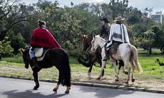 DSC_5215 (neyde zys) Tags: bandadabrigada brigadamilitar desfilefarroupilha gauchos indumentaria prendas tradicao