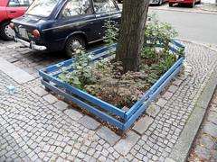 Stadtgarten (onnola) Tags: berlin kreuzberg deutschland germany graefekiez baumscheibe stadtgrn begrnung urbangardening strase brgersteig street pavement auto car zaun fence
