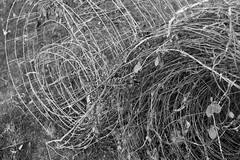 Bouquets of Barbed Wire (The_Kevster) Tags: leica trees blackandwhite bw monochrome grass leaves forest wire woods mesh branches yorkshire rangefinder barbedwire roll northyorkshire hackfall summicron50mm leicam9
