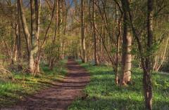 Gransden Wood (HDR) (eFRAME.co.uk) Tags: bluebells spring path framed framer frame framing hdr pictureframes pictureframe photoframes eframe gransdenwood eframecouk 20120427