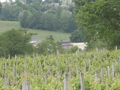 Vigne Château du Garde
