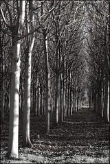 French Countryside (ralphb58.) Tags: new trees money wales south australia richmond lane nsw newsouthwales frenchcountryside moneylane