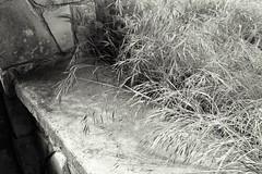 Stone and Grass - Farmhouse Series (Baisao) Tags: bw abandoned film grass stone farmhouse 35mm blackwhite impermanence delta100 id11 50mmsummicron selfdev leicam6wetzlar 4xyellowfilter id11stock85min 50mmsummicronveriv