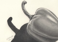 Capsicum (Michelle George) Tags: paper drawing graphite capsicum realism