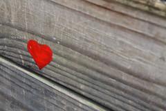 Youth © (Blackcatatheart) Tags: wood love bench graffiti heart scratch idealism