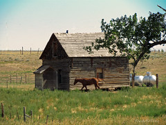 Horse House (RootsRunDeep) Tags: ranch old horse tree abandoned nature wooden country western homestead wyoming