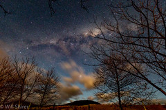 1G6A9174 (Will Shirer) Tags: kuratau night stars sky trees milkyway laketaupo newzealand skytheme daarklands