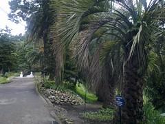Botanical_Garden_Batumi (8) (Sasha India) Tags: travel georgia journey jardimbotnico botanicalgarden jardinbotanique batumi   gorgie excurso acara    adjara      botanikbahesi         grcstan        nbatatba          acarstan sfr