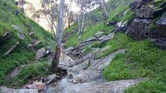20160716_150015 (StephenMitchell) Tags: adelaidegreenhills nature organic trees gully valley hill mountain blackwood belair edenhills southaustralia trek walk creek rock stone
