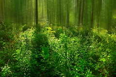 nikon_d90_nikkor_18_105_vr_21.08.16_06 (malemonada) Tags: forest wood green summer outdoor latesummer texture