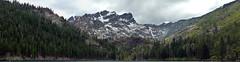P1080223 Stitchr (everbruin) Tags: sierrabuttes california mountains snowcapped panorama trees sierranevada