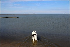 West Kirby Wirral 230816 (10) (Liz Callan) Tags: westkirby wirral sea seaside beach rocks boats ben bordercollie dogs sky water waves buildings lizcallan lizcallanphotography