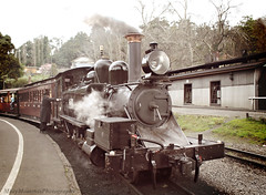 Puffing Billy (misty1925) Tags: puffingbilly train steamtrain belgrave victoria engine dandenongranges
