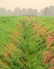Bridge the Dyke (Travis Pictures) Tags: langtoft peterborough lincolnshire marketdeeping southkesteven field fog foggy mist rural farm nikon d5200 photoshop morning outdoors countryside agriculture ditch drainage trees foliage