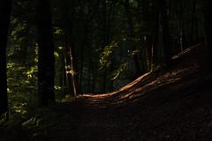Twilight Zone (thunderbird-72) Tags: allemagne shadow besseringen stgangolf germany nikond7100 wald light mettlach trees abendstimmung forest arbre abendlicht lichtundschatten bume deutschland saarland de