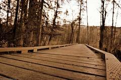 Bridges!  #bridge #bridges #structures #blue #green #nature #outdoors #alaska #adventure #nikon (DavidCJenkins Photography) Tags: nikon blue nature adventure bridge outdoors structures bridges green alaska