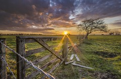 Fenced in (zebedee1971) Tags: landscape green grass pasture fence barbed barb wire gate wooden tree sunset cloud clouds light sunlight dusk wood farm farmland cows dairy post orange