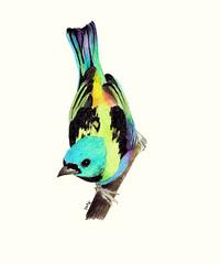 * (Daniela Dahf Henríquez) Tags: chile foto colores pajarito ilustración talca inspiración lápicesdecolores danielahenríquez dahf
