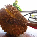 "Closed Durian <a style=""margin-left:10px; font-size:0.8em;"" href=""http://www.flickr.com/photos/14315427@N00/6996248012/"" target=""_blank"">@flickr</a>"
