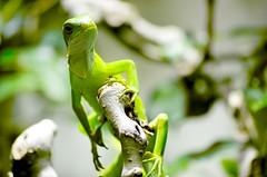 Green farag (Yasser,) Tags: camera trees tree green animals zoo view urlaub colored grn zrich zri vcation removedfromstrobistpool nooffcameraflash seerule1
