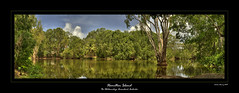Hamilton Island Lake (Andrew Fleming Photography) Tags: trees lake reflection hamilton australia andrew whitsundays qld queensland hamiltonisland fleming whitsundayislands andrewfleming