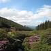 Loughglenbridge Blooms