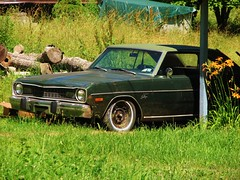 AN OLD SWINGER (richie 59) Tags: trees summer usa green cars hardtop car rural america outside us rust automobile country rusty headlights grill faded chrome rusted vehicle dodge newyorkstate headlight mopar oldcar frontyard oldcars dodgedart dart automobiles swinger rustycar 2012 nystate rustyoldcar americancars frontend hudsonvalley greencar grills greencars 2door americancar motorvehicles fadedpaint ulstercounty twodoor mopars vinyltop uscar uscars midhudsonvalley olddodge oldrustycar ulstercountyny dodgedartswinger dartswinger chryslercorporation 2doorhardtop rustydodge 1970scars 1970scar 1973dodgedart dodgeswinger 1973dodge townofulster richie59 oldmopars june2012 oldmopar townofulsterny dodgehardtop june232012 1973dart