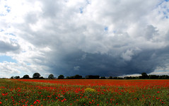 Poppy Fields (Benjaminio) Tags: flowers red sky nature field clouds canon landscape eos poppy 1100d friendlychallenges