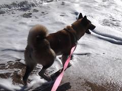 She loves the ocean (Natureholic) Tags: flamboyan