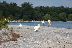 Darlington Provintial Park (bukharov) Tags: summer vacation lake ontario canada beach holidays отдых вода озеро пляж жара канада онтарио