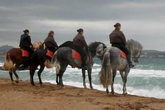 DSC_5739 (ichauvel) Tags: sea horses woman mer man france beach cheval europe waves femme vagues fréjus plage var homme chevaux cavaliers