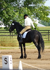 DSC01490 (jmbedel) Tags: show horses horse competition zee riding horseback zayden friesian dressage cads classicalattractiondressagesociety cessnastables
