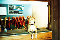 life gaurd dog (J•M•R) Tags: dog film colors animal canon 50mm dof boxerdog vintagecamera overexposed a1 canona1 oversaturated 50mmf14 asa100 wideopen colorfilm gaurddog lomofilm 50mf14 flickraward 50mmf14fd xprochromeiso100