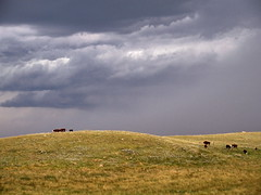 SKSW12g05 Storm Clouds over Cattle (CanadaGood) Tags: ranch blue brown canada storm color colour animal afternoon cattle riverside sk prairie saskatchewan agriculture 2012 canadagood thisdecade
