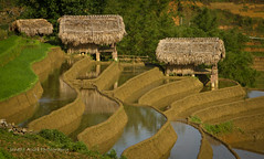 Rice terraces near Sapa (NettyA) Tags: travel water canon asia rice terraces vietnam huts roofs southeast sapa thatched eos550d