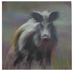"Betty Harrison 'Wild Boar' oil on board 10 x 10 cm • <a style=""font-size:0.8em;"" href=""http://www.flickr.com/photos/77881881@N06/7686595042/"" target=""_blank"">View on Flickr</a>"