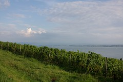 The vineyard and the lake (dididumm) Tags: vineyard sunshine summer bluesky blauerhimmel sommer sonnenschein weinberg lakeconstance bodensee meersburg badenwrttemberg germany