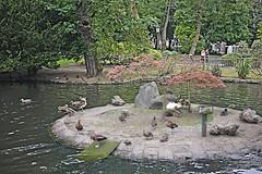 P1290753 (Jusotil_1943) Tags: parque oviedo patos ducks