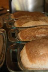 Fresh (Brandi Bonde) Tags: bread bake breakbread homecookinghomemade thehousesmellsawesome wheat wholewheatbread wholesome