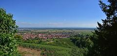 Kintzheim (Diegojack) Tags: paysages alsace kintzheim volerie aigles village vignes
