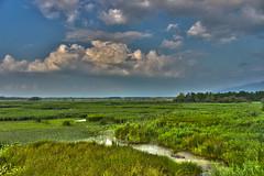 Efteni Gl-Dzce-Trkiye (syhnbykync) Tags: lake gl efteni naturel doa cloud green sky trkiye dzce plain alluvialplain nature