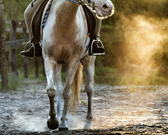 Horse and Dust (Regular Expressions) Tags: horse horses animal animals equestrian outdoors backlight backlit