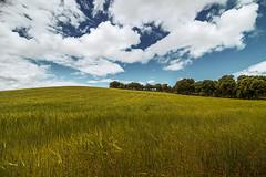 Campos de Castilla (PhotoJorge) Tags: camposdecastilla spain burgos araujodesalce