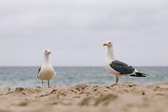 IMG_0933.jpg (Jordan j. Morris) Tags: natural photos picture focus texture summer exposure grain beach light photo jomophoto 5d color snapshot family pic 5dmrkii capture composition lake iso 2016 arrowhead friends