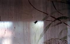 Una mosca (Minchioletta) Tags: pentaxmesuper smcpentaxa50mm smcpentaxa50mmf17 50mmlens agfavista400 analogicait lomographyandvintagecameras c41 mosca fly tenda curtain