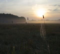 Morgenstimmung (fotio14) Tags: wiese sonne spinnennetz netz nebel tropfen