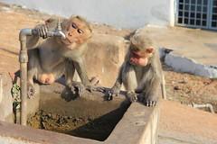 IMG_5094 (Lucia Bolivar) Tags: agua pareja fuente beber monos genitales
